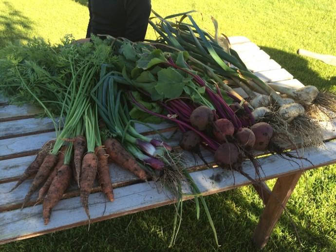 Midsummer Harvest